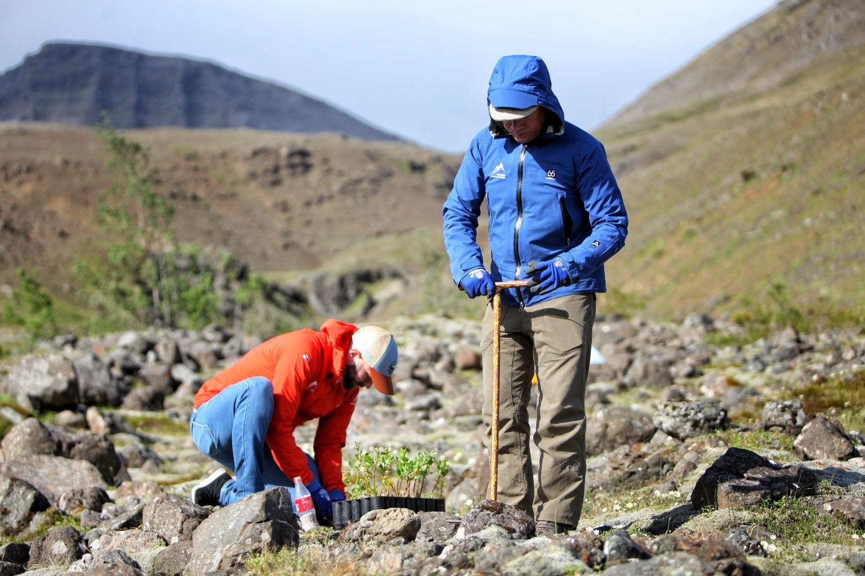 Two men planting a tree in Iceland