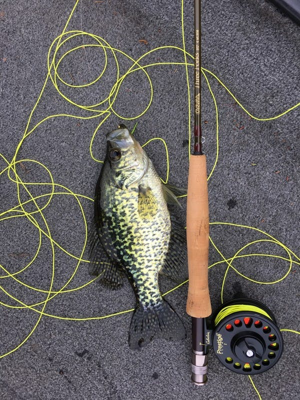 Brown bass next to a fishing rod, yellow line all over the ground.