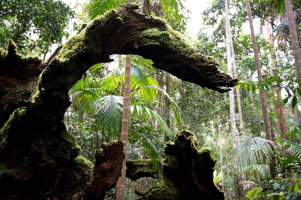 3386212d6cdc298612ae104076cc8c190cbd894a rainforest before