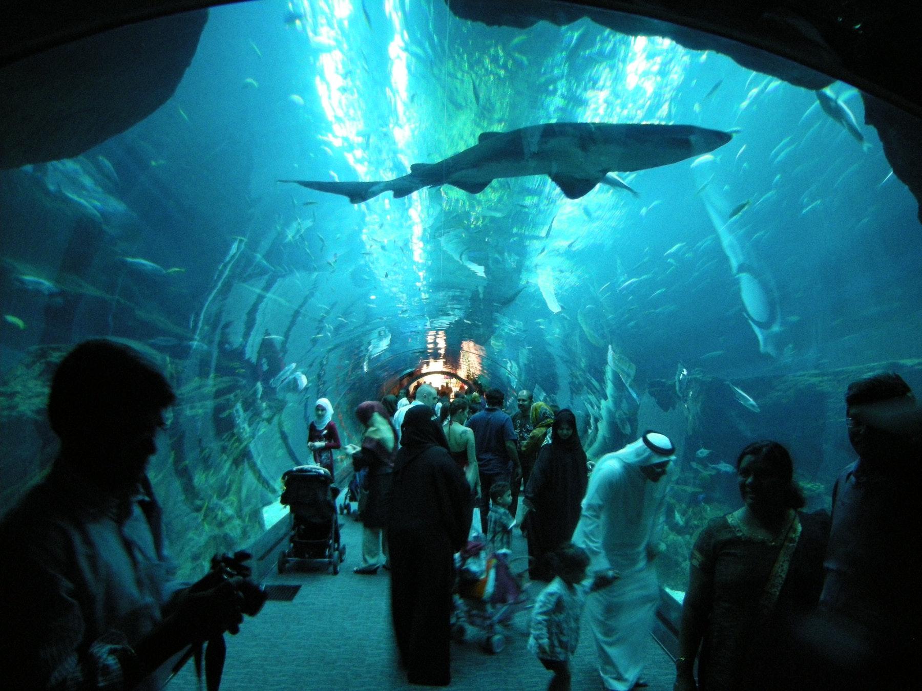 Aquarium Tickets