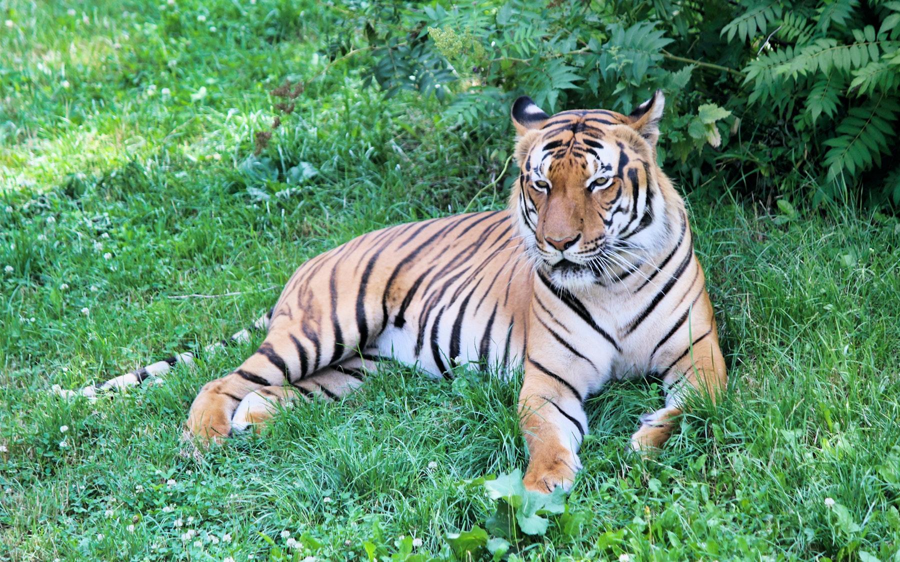 Loire Valley Zoo