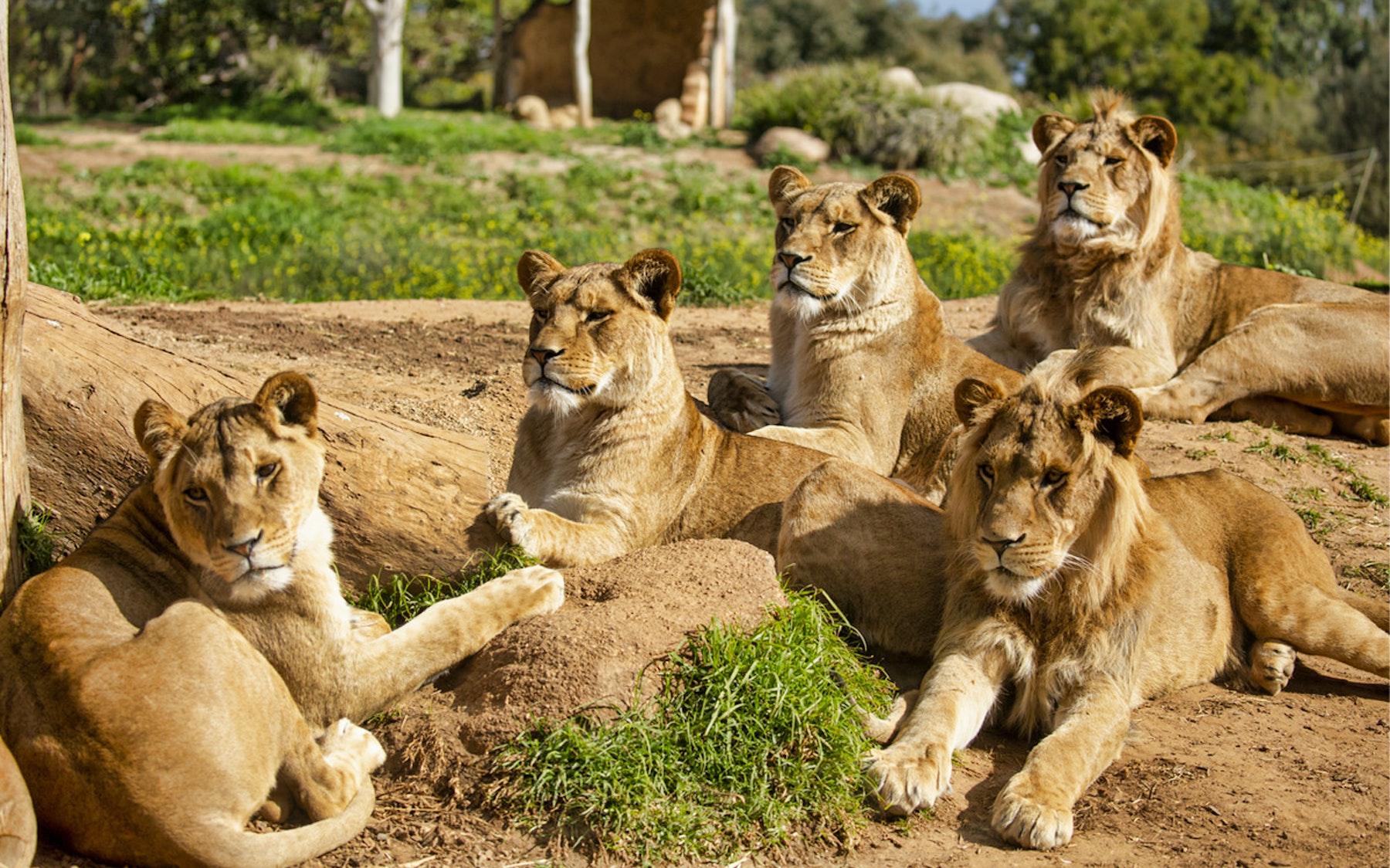 Werribee Open Range Zoo