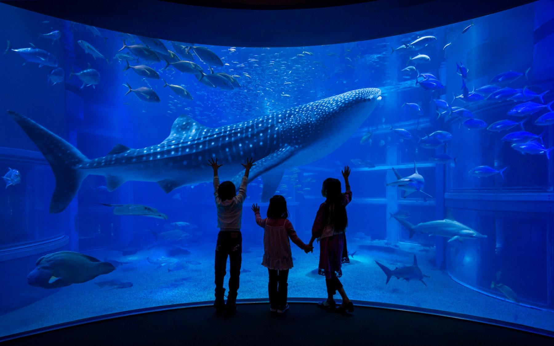 Chiang Mai Aquarium Tickets