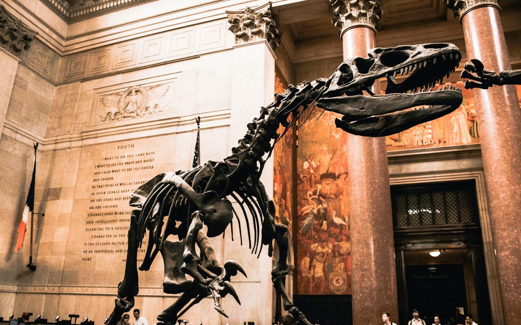 Natural Museum History