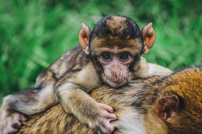 Trentham Monkey Forest in Birmingham