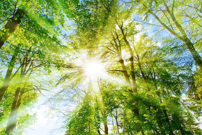 Sunshine shining through the trees