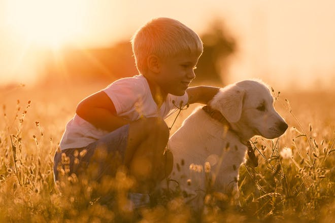 Boy with pet dog in field