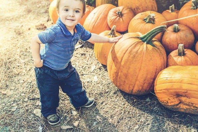 little boy with pumpkins