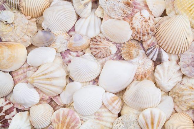 Close up of lots of shells