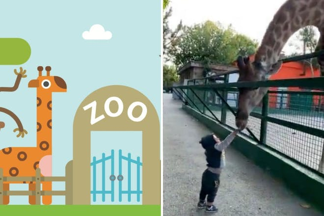Left: Zoo graphicRight: Boy feeding giraffe