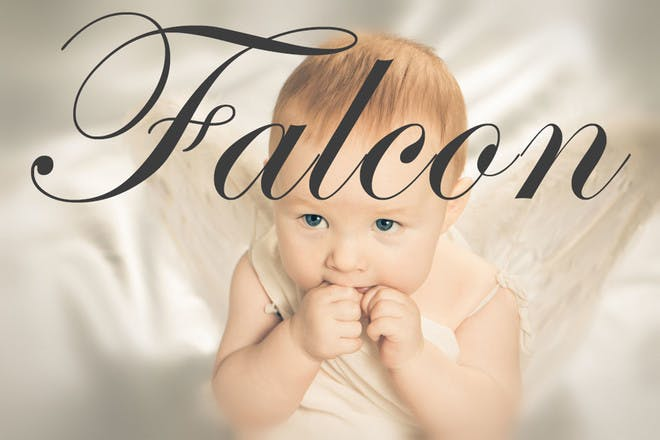 Baby name Falcon