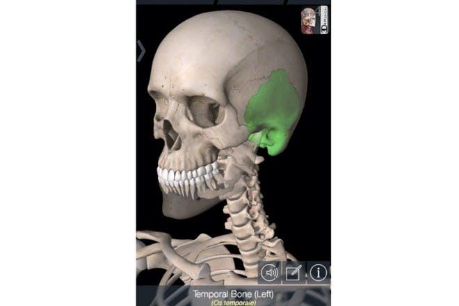 essential skeleton app