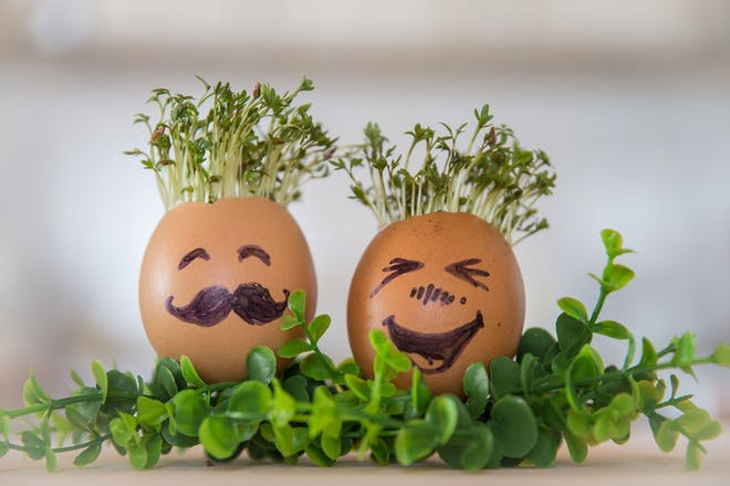 cress growing in two eggshells