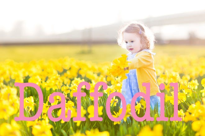 Daffodil - Easter baby names