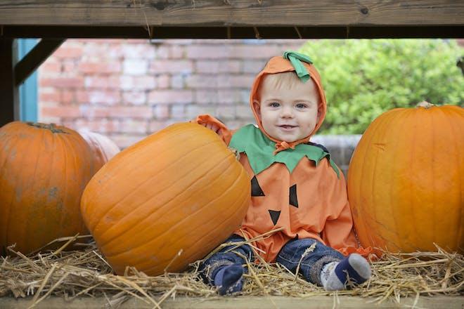 A pumpkin baby enjoys Tulleys Pumpkin Farm