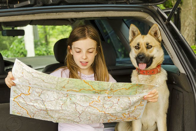 Girl reading map in car with dog