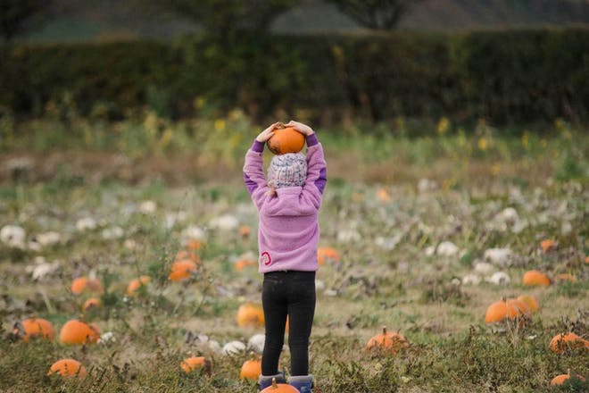 A kid plays among the pumpkins at The Patch at Kilduff