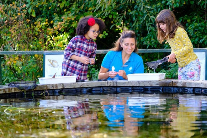 Pond dipping at WWT Castle Espie