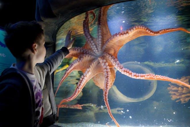 Boy touching large octopus through glass at aquarium