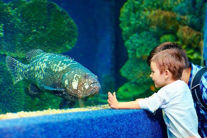Boy and dad looking at big fish in aquarium