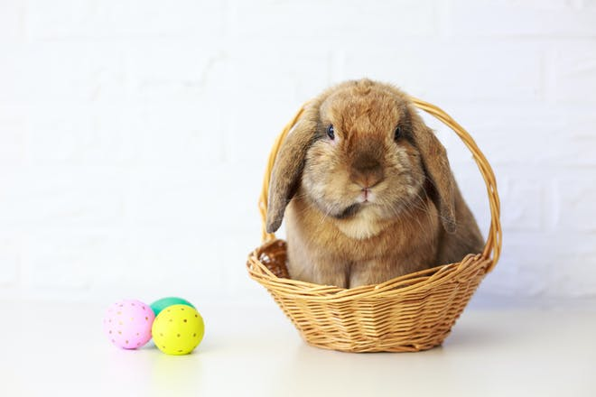 Easter bunny in a basket with Easter eggs