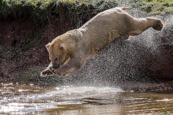 See polar bears at Yorkshire Wildlife Park