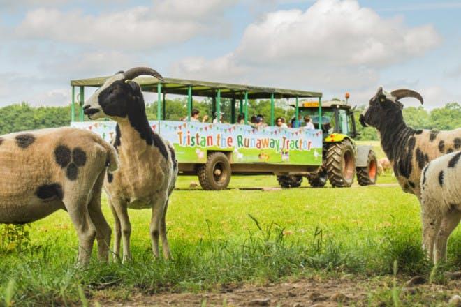 19. Willows Activity Farm