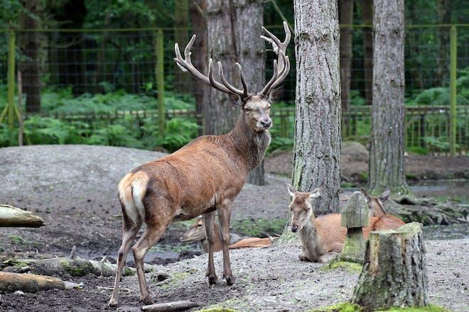 Wildwood Trust deer