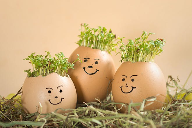 Three egg shells with faces on and cress hair