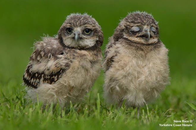 Two baby birds