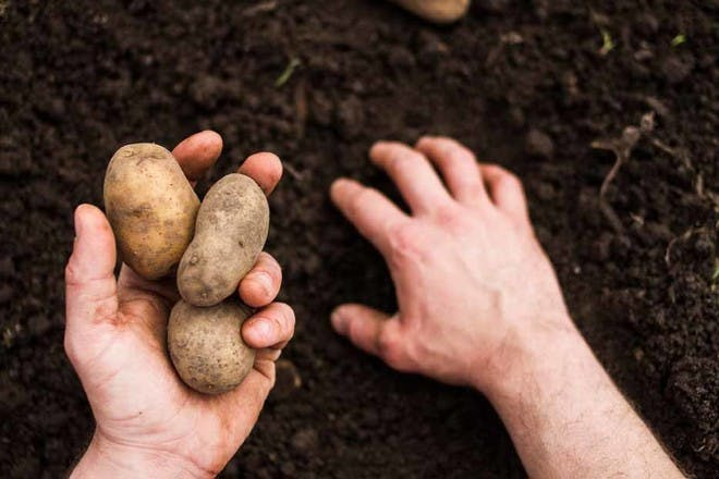 25. One potato, two potato