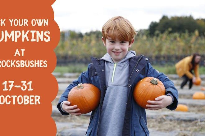 PYO Pumpkins at Brocksbushes, Northumberland