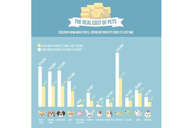 Infopgrahic showing the cost of owning a pet