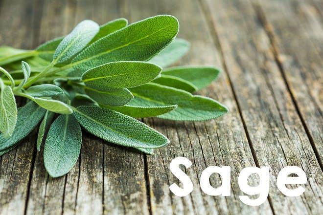26. Sage