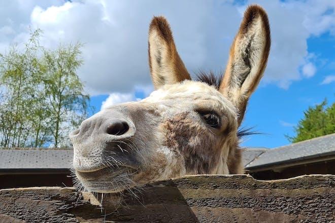 The Donkey Sanctuary, Sidmouth
