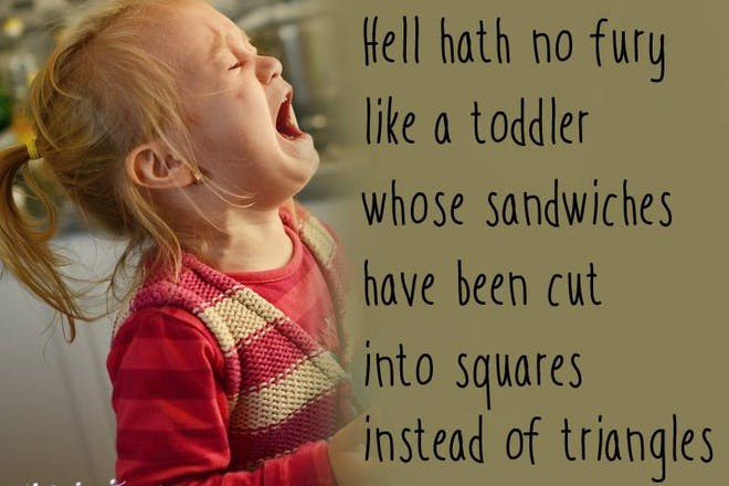 Hell hath no fury like a toddler whose sandwiches have been cut into squares instead of triangles