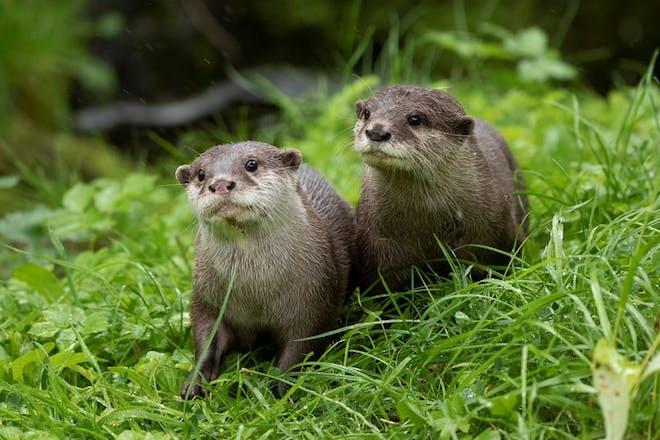 Otters at Edinburgh Zoo