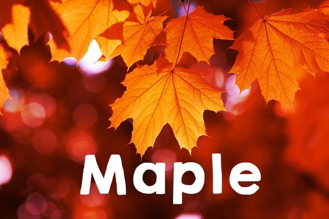 21. Maple