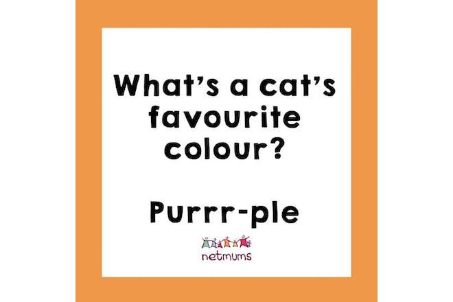 Joke: What's a cat's favourite colour? Purrple