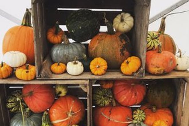 Colourful pumpkins and gourds galore at Saxby's in Northamptonshire