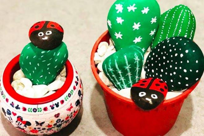 27. Pebble cactus plants