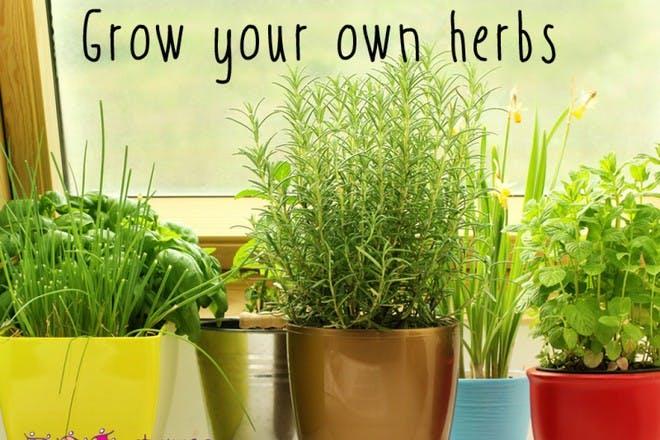 herbs growing in pots