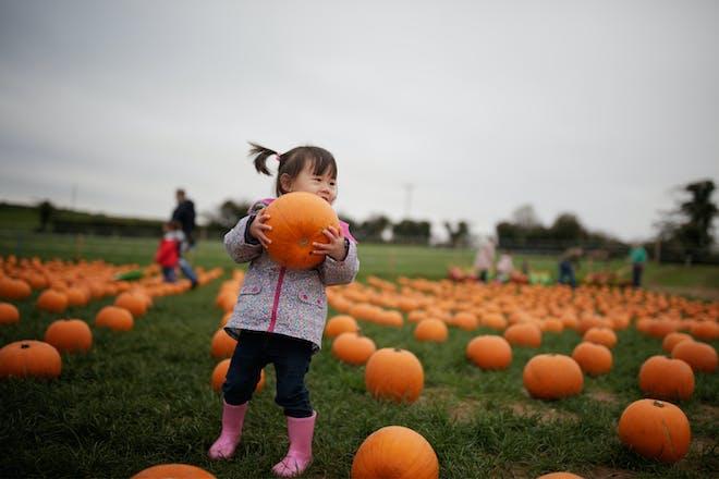 A toddler wearing wellies and a coat carries a Halloween pumpkin out of a pumpkin patch