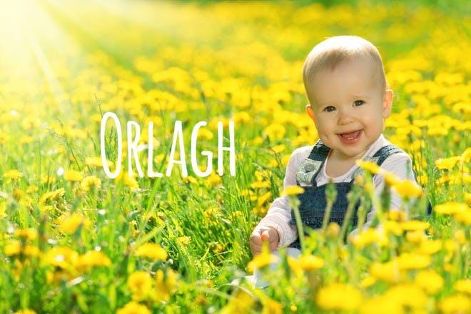 17. Orlagh