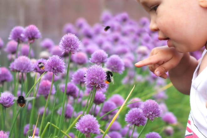 Toddler pointing at a bee on a purple plant