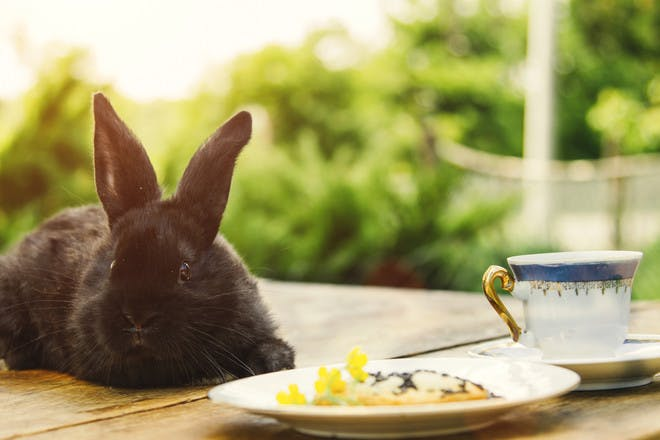 Breakfast or Tea with the Easter Bunny