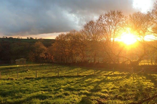One Cat Farm, Wales
