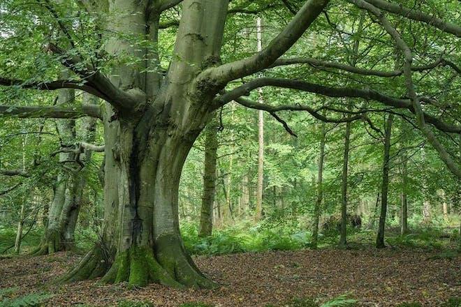 Miltonrigg Woods, Cumbria
