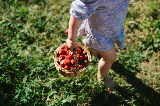 child with a basket of strawberries