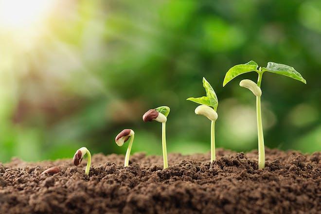Seeds growing in soil